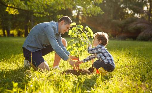 A man and a very young child plant a small tree.