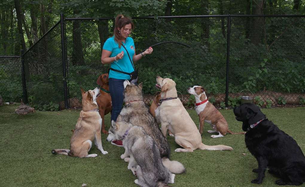 A woman holds a dog treat in front of seven very cute dogs.